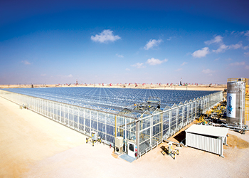 Oman has taken to solar for its EOR