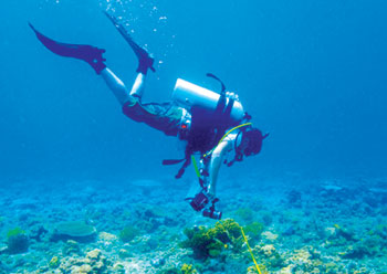 A diver inspecting the sea-bed